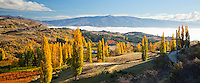 Autumn colour along Conroys road, near Alexandra in Central Otago, New Zealand - stock photo, canvas, fine art print