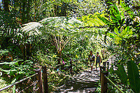Visitors take in the lush surroundings as they walk the boardwalk at the Hawai'i Tropical Botanical Garden in Onomea (a 4-mile scenic drive north from Hilo) on the Big Island of Hawaiʻi.