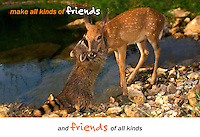 Make all kinds of friends, and friends of all kinds