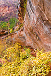 Fall color and cascade at the lower Emerald Pools, Zion National Park, Utah