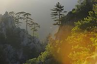 Rewilding Europe/S Carpathians, Romania