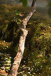 Driftwood in a boggy setting