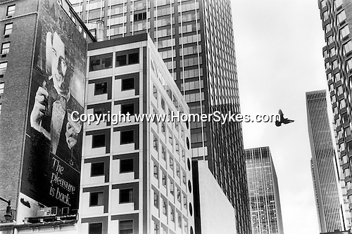 """NEW YORK - USA 1999. A PIGEON FLIES ACROSS THE SKYLINE BETWEEN SKY SCRAPERS. AN ADVERTISEMENT FOR CIGARETTES; """"THE PLEASURE IS BACK""""  IS  PAINTED ONTO THE SIDE OF AN OLD APARTMENT BUILDING, AND IS NOW HALF HIDDEN BY MORE RECENT ADDITIONS TO THE MIDTOWN SKYLINE."""