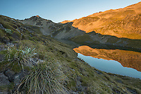 Sunrise over alpine tarn with reflections, Nelson Lake National Park, South Island, New Zealand, NZ