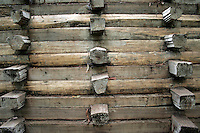 4 August 2006: Log art graphic found during a hike along Highway 1 through central California along the coast of Big Sur.