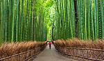 Bamboo garden, Kyoto, Japan
