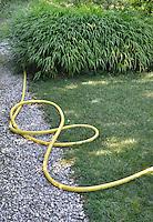 A yellow garden hose lies on the lawn in a garden.