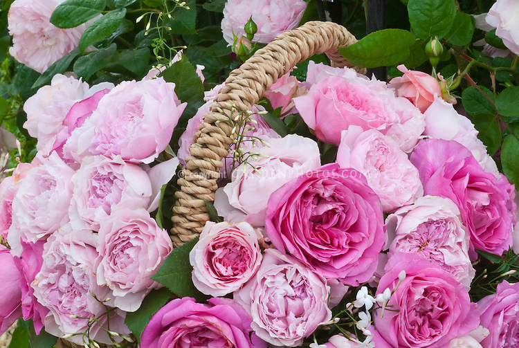 Pink Roses in wicker straw basket, Rosa mixed pale and deep colors in pretty arrangement