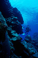 DIVER ON REEF<br /> Devil's Grotto<br /> Diver explores reef in search of marine life with underwater photography equipment.
