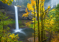 Silver Falls State Park, OR   <br /> South Falls plunges 177 ft over basalt cliff into <br /> Silver Creek Canyon framed with Big Leaf Maples in fall color