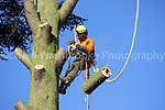 High Elms Tree Surgery Harpenden 27th January 2012