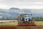 Tractor tilling in a field with seagulls scavaging for worms