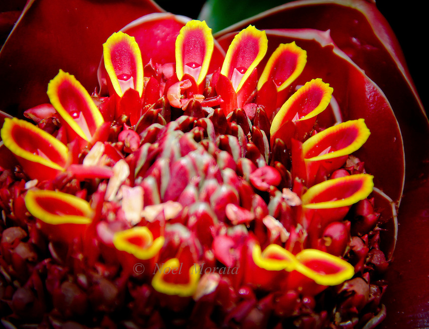 Exotic and unusual flowers from various species of plants from tropical, desert, mediterranean, hybrids and rare.