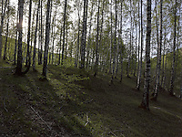 FOREST_LOCATION_90060