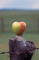 apple on top of a wooden fence post