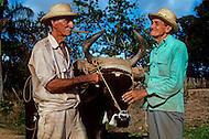 Cuba, March 1992: Tobacco farmers smoking a cigar a tobacco field, near Vinales, Cuba.