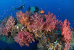 Soft corals covering a natural reef arch with diver in the background