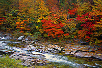 Fall foliage, Mt. Odeasan National Park, South Korea