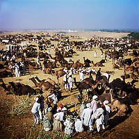 Raika men do business at the Pushkar Camel Fair. Every year thousands of traders, breeders, herders and camels arrive in town to trade, buy and sell camels. The Raika are an ancestral caste of camel breeders in Rajasthan. Due to the increased cost of feeding and shelter, more and more Raika are being forced to sell off their camels, often for camel meat, which was once considered taboo.