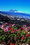 Mount Teide overlooking the Oratava valley. Oratava,Tenerife,Canary Islands,Spain