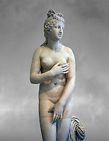 2nd century AD Roman marble sculpture of Aphrodite (Venus), 'Dresden Capitoline Type, copied from a Hellanistic Greek original,  inv 6238, Museum of Archaeology, Italy, grey art background