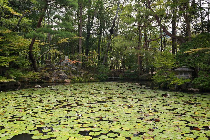 Waterlily pads cover the pod at Tenju-an, Nanzen-ji Temple, Kyoto.