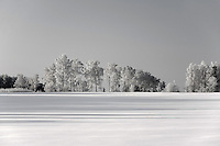 Winter Landscape and Snow Covered Trees