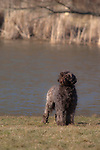 Portuguese Water Dog<br /> <br /> Shopping cart has 3 Tabs:<br /> <br /> 1) Rights-Managed downloads for Commercial Use<br /> <br /> 2) Print sizes from wallet to 20x30<br /> <br /> 3) Merchandise items like T-shirts and refrigerator magnets