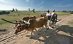 An ox cart in the Cambodian village of Somrith.