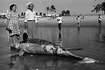 Mexican couple with dead Dolphin washed up on the beach at Mazatlan Mexico. pose for a photograph.