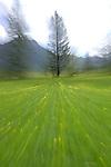 Blurred meadow, Austrian Alps.