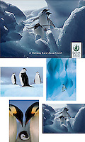 Penguins Christmas Card Assortment<br /> <br /> Inside message: Season's Greetings.<br /> <br /> Photographs by Colin Monteath, Tui De Roy, Art Wolfe, and Jan Vermeer. <br /> <br /> Twenty assorted 5 x 7&quot; holiday cards (5 each of 4 designs) plus envelopes in a decorative box. Printed on recycled paper with soy based inks.
