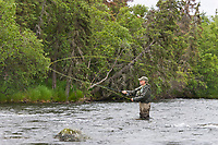 Fly fishing for rainbow trout on the Brooks river, Katmai National Park, southwest, Alaska.