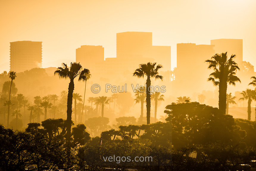 Sunrise on The Beach With Palm Trees Palm Trees Newport Beach