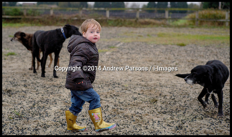 Image ©Licensed to i-Images Picture Agency. 16/11/2014. London. A young boy enjoying the english countryside with his golden peppa pig wellies on. Picture by Andrew Parsons / i-Images