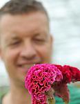 Foto: VidiPhoto<br /> <br /> BRAKEL - Het is pas het tweede jaar dat de gebr. Klop (Maatschap Klop Kwekerij) uit Brakel celosia's als hoofdgewas telen, maar de fluweelzachte en exotisch gevormde snijbloemen staan er piekfijn bij in de 1,7 ha. grote kas van Gert-Jan en Sander Klop. Nu de kinderziektes van de bewerkelijke bloem tot het verleden behoren, heeft het product duidelijk potentie. Het wonderlijke is echter dat de celosia nog te weinig bij bloemist en consument tussen de oren zit. Daar moet wat aan gebeuren, vindt Gert-Jan Klop (foto). Gelukkig gaf de laatste moederdag een flinke boost aan de bekendheid van de exclusieve zomerbloem, die vooral tussen week 13 en week 43 verkrijgbaar is. Voor een grote promotiecampagne hebben de slechts zeven kwekers echter te weinig budget. De zomerbloem doet er acht weken over om tot een oogstrijp product te groeien.  De 700.000 stelen van de gebr. Klop worden via drie Nederlandse bloemenveilingen verspreid over West-Europa. Slechts 20 procent blijft in eigen land.