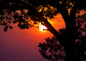 A setting sun paints the sky with intense evening colors behind a lone tree.