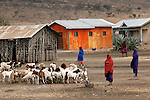 Africa, Tanzania, Arusha. Masai gather their goat herds to market.