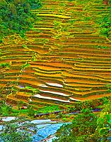 Ancient Rice Terraces at Banaue, Banaue World Heritage Site, Ifugao, Philippines