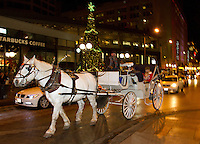 Horse & Carriage Seattle 2014