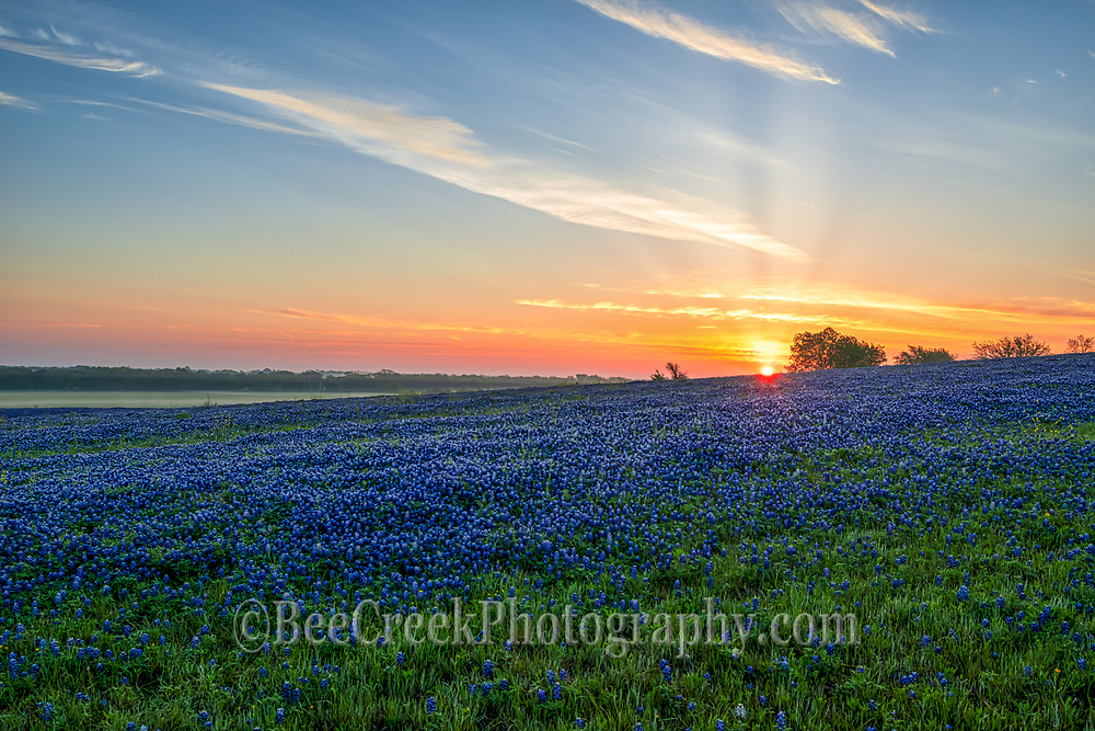 Sunrise over the bluebonnet landscape in this pasture.  We got there early so we could see the sunrise over this field of flowers.