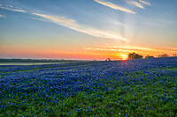 Sunrise over the Bluebonnets