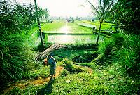 Rice fields near Bangan, Bali, Indonesia