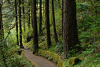Trail through forest to Wahkeena Falls along the Columbia River Gorge.