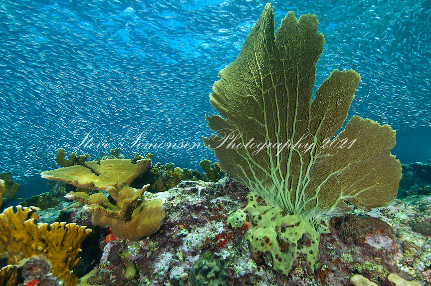 Reef Scenic<br /> Carval Rock<br /> U.S. Virgin Islands