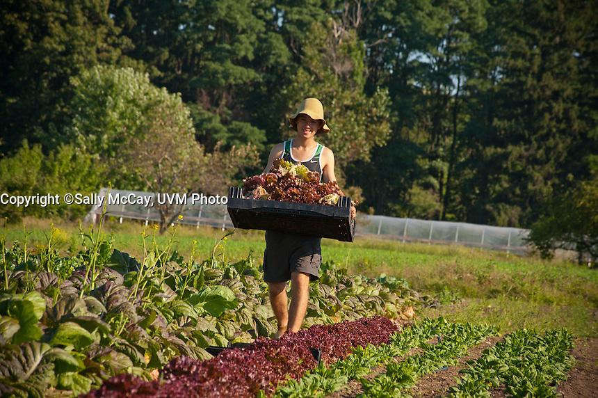 UVM Hort Farm Summer Views