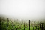 Foggy vineyard, Angwin, Ca., on Saturday, Feb. 6, 2010.