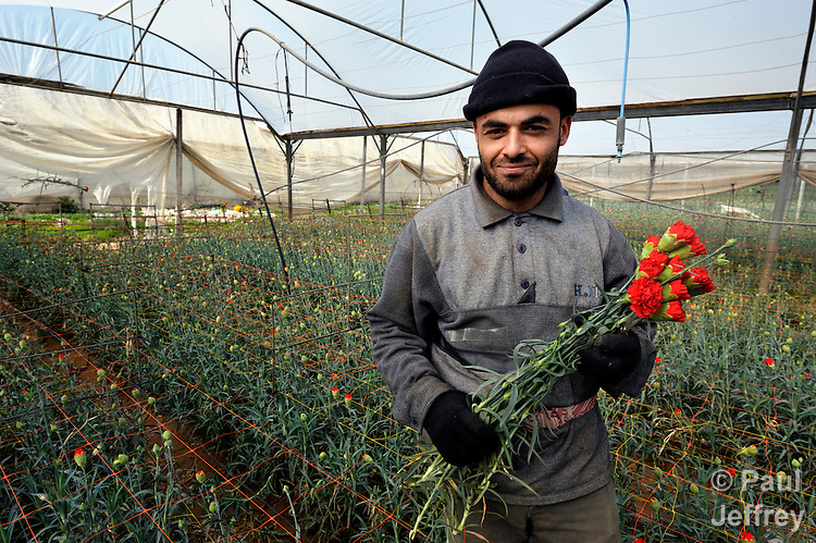 Looters strip Gaza greenhouses - World news -