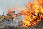 Foto: VidiPhoto<br /> <br /> ELST (Gld) - Een grote grijpmachine van loonbedrijf B. de Vree uit Dodewaard is woensdag nodig om in de buurt van Elst (Gld) de niet verkochte bomen, bamboestokken en snoeihout in de enorme vuurzee van boomkweker Combinatie Mauritz te werpen. Door het koude voorjaar hebben boomkwekers niet voor de deadline van 1 juni hun houtafval kunnen verwerken en geven de gemeenten Neder-Betuwe en Overbetuwe tot eind juli ontheffing voor het verbranden van de restanten. In beide gemeenten bevinden zich veel percelen van boomkwekers. Neder-Betuwe is daarin soepeler dan de buurgemeente. Waar bij de een een telefonische melding volstaat, moet bij de ander een offici&euml;le ontheffing aangevraagd worden. De Combinatie Mauritz is wat productie betreft de grootste laanboomkweker van Nederland en heeft in zowel Overbetuwe als Neder-Betuwe zo'n 150 ha. grond.