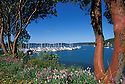 Boats at Westsound Marina framed by Madrone trees; Orcas Island, San Juan Islands, Washington.